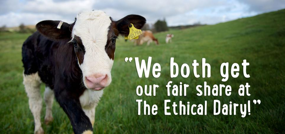We both get our fair share at the Ethical Dairy